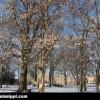ole-miss-grove-snow-2
