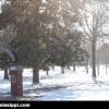 ole-miss-walk-of-champions-snow